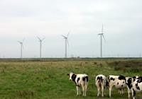 風車の近くには牧場